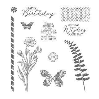 Butterfly-Basics-137154